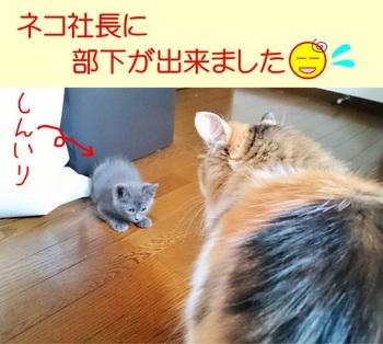 ネコ社長に部下.jpg